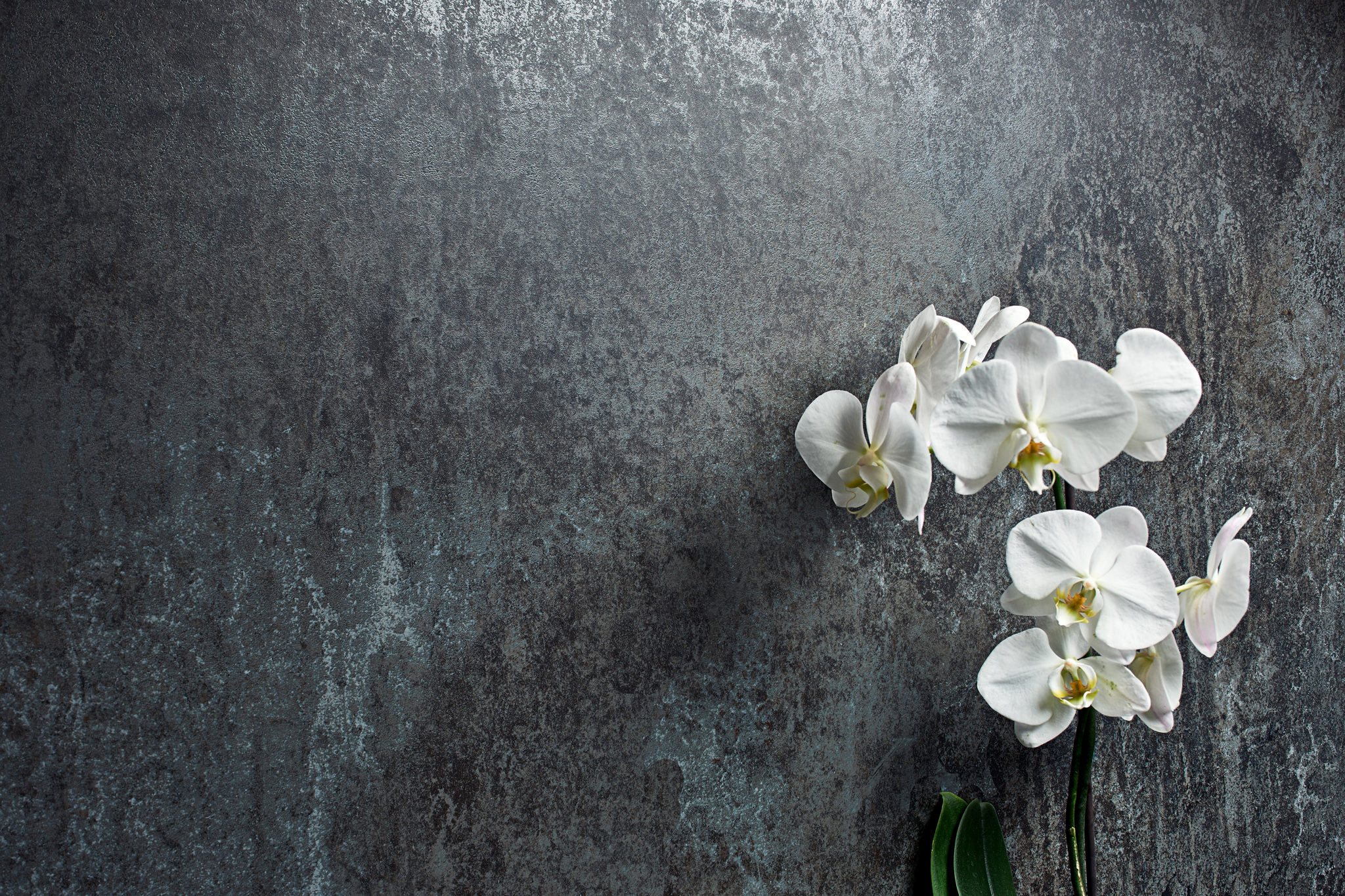 porcelain tile images: Fusione range high quality photo