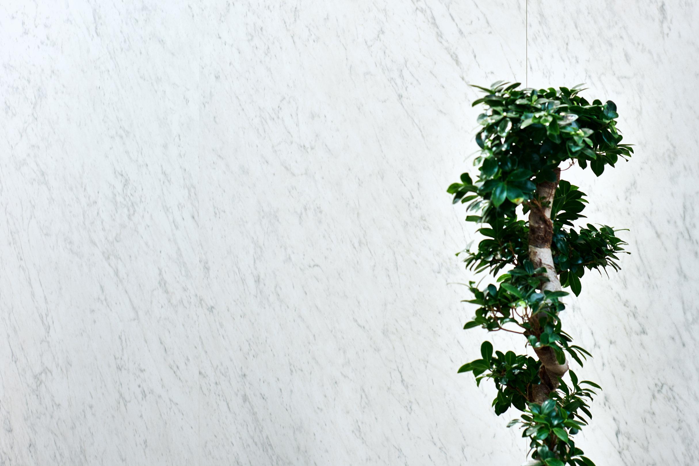 porcelain tile images: Grandi Marmi range high quality photo